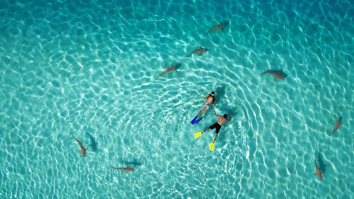 1st Prize Winner – Category Nature: Snorkeling with sharks by Tahitiflyshoot